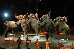 Ringling Bros., elephants and serving as creation's stewards