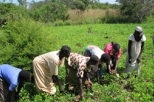 Restorative farming in South Sudan