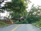 Downed trees, excessive heat and the gift of hospitality