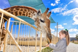 Do Zoos Have a Future? Should They?